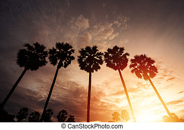Silhouette coconut palm trees on beach at sunset.