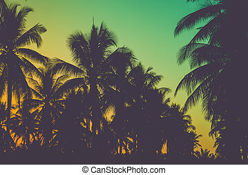 Silhouette coconut palm trees