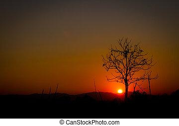 silhouette, copyspace, soleil, sans feuilles, arbre, coucher soleil, rouges, gauche