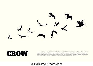 silhouette, corneille, isolé, arrière-plan., noir, blanc, corbeau