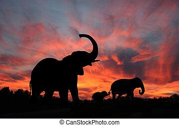 silhouette, coucher soleil, éléphants