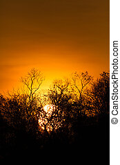 silhouette, coucher soleil, arbres