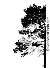 silhouette, de, arbres.