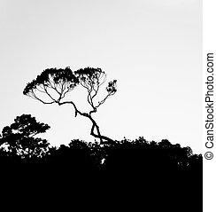 silhouette, de, arbres