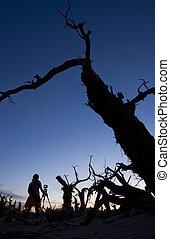 silhouette, de, arbres, sur, coucher soleil