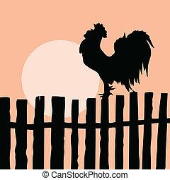 silhouette, de, les, coq, sur, vieux, barrière