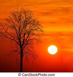 silhouette dead tree at sunset