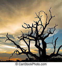 silhouette dead tree with sunset background