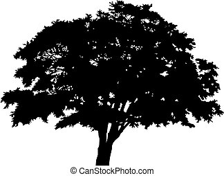 silhouette detached tree with leaves on a white background