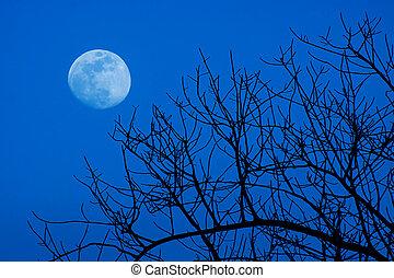 silhouette, di, albero morto, con, cielo, fondo.