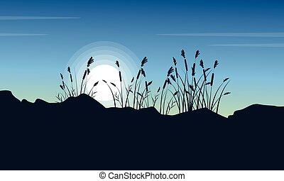 silhouette, di, brutale, erba, a, mattina, scenario