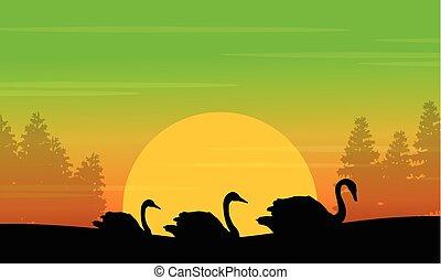 silhouette, di, cigno, in, il, collina, a, alba, scenario