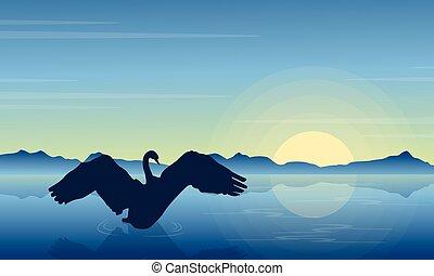 silhouette, di, cigno, in, il, lago, a, alba