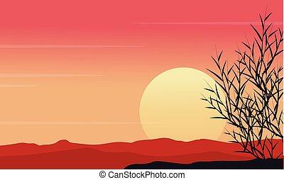 silhouette, di, erba, a, mattina, scenario