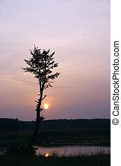 silhouette, di, uno, albero, contro, il, venuta, sole