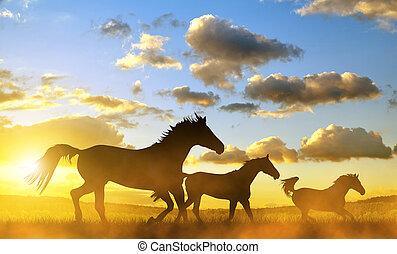 silhouette, di, uno, cavalli, in, galoppo