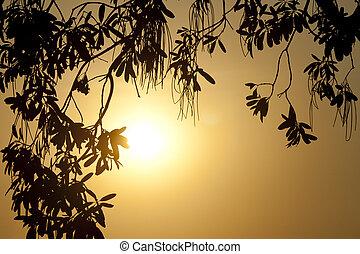 silhouette, di, uno, foglia, albero