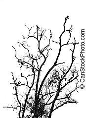 silhouette, di, uno, morto, albero.