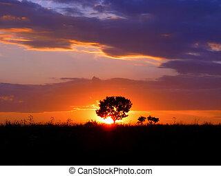 silhouette, di, uno, singolo, albero, contro, il, sole montaggio