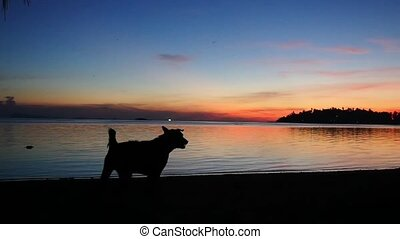 Silhouette domestic pet dog on sandy beach at amazing...