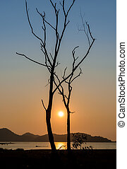 Silhouette dry tree and lake in sunset sky