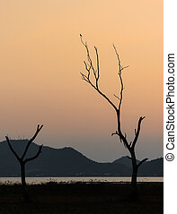 Silhouette dry tree and lake with mountain range background in sunset sky