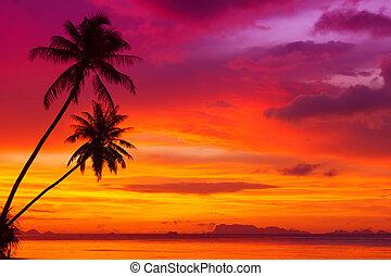 silhouette, due, albero, tropicale, tramonto, spiaggia palma