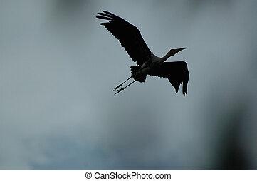 silhouette egret - egret in flight