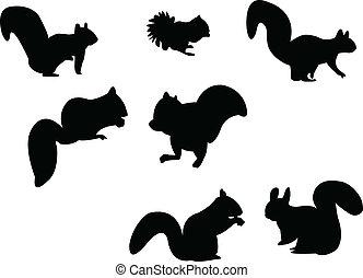 silhouette, eichhörnchen