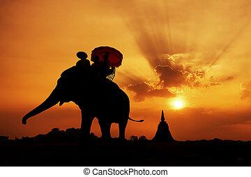 silhouette, elefant