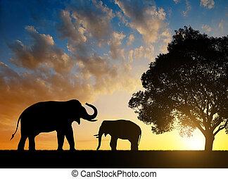 silhouette, elefanten