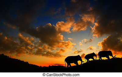 Silhouette elephant over sunset.