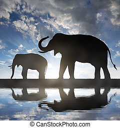 Silhouette elephants