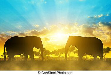 Silhouette elephants on the savannah