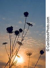 silhouette, erba, tramonto