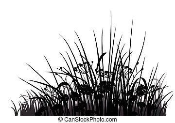 silhouette, fleurs, herbe
