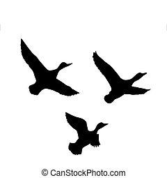 silhouette, fliegendes, vektor, hintergrund, ente, weißes