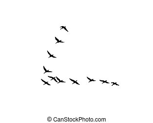 silhouette flock geese on white background