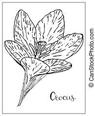 silhouette, floral, illustratie, vector, krokus, flowers.