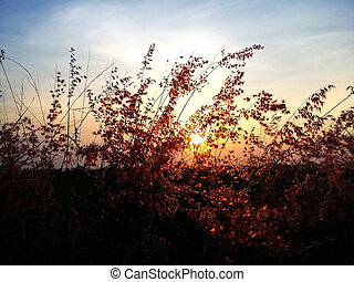 Silhouette flower at sunset with colorful sky