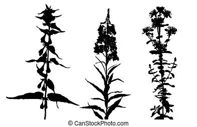 silhouette, flowerses, illustration, fond, vecteur, blanc