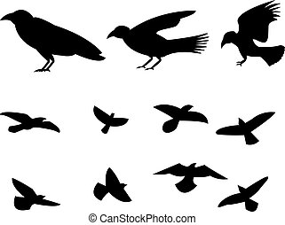 Silhouette flying raven bird, vector