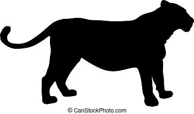 silhouette, fond, lionne, blanc