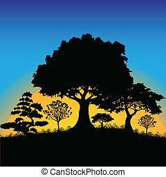 silhouette, foresta