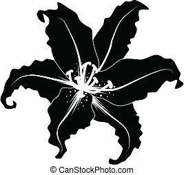 silhouette, giglio