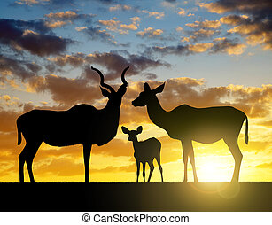 Silhouette Greater kudu
