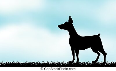 Silhouette greyhound on the field