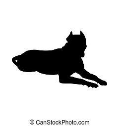 silhouette, grube, terrier, hund, stier