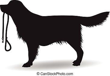 silhouette, hund