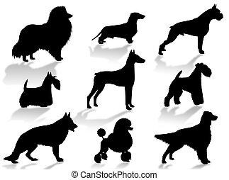 silhouette, hunden, rassen